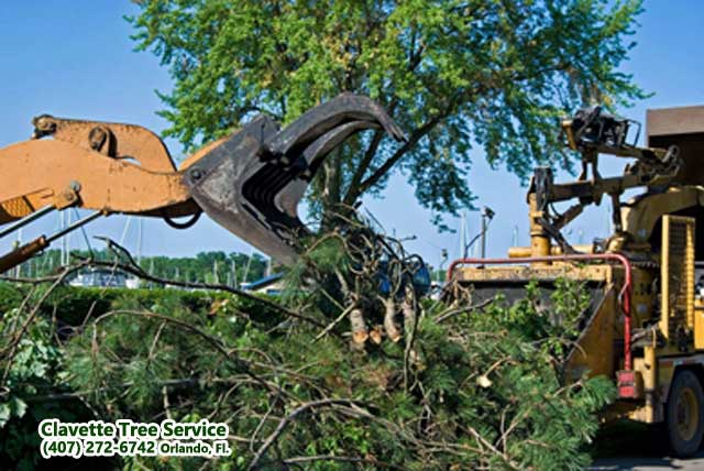 tree removal service photo 1