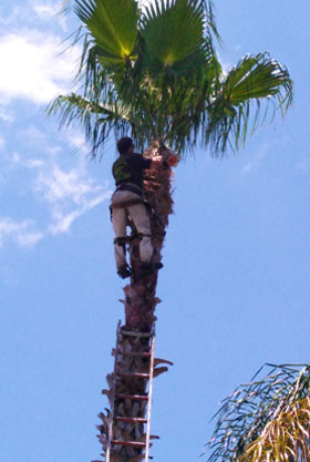 tree removal service photo 2