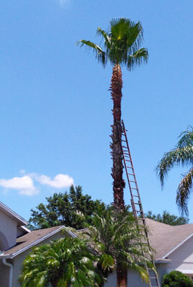 tree removal service photo 4